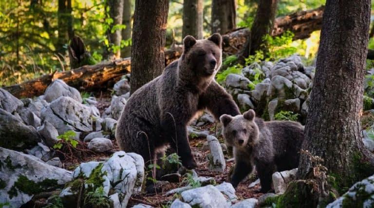 Bärenabwehrspray Test Vergleich Kaufratgeber